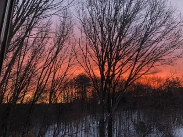Red Oak at Sunrise