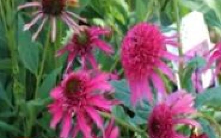 native plants